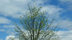 Solitary tree under opened by sky Stock Footage