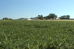 Soybean field with barn in background Stock Footage