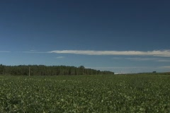 Soybean Fields wide Stock Footage