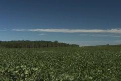 Soybean push to horizon Stock Footage