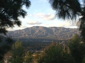 Ponderosa Pine trees frame the San Gabriel Mountains and San Fernando Valley in Stock Footage