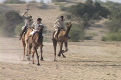 Camels race at the camel festival in India. Stock Footage