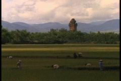 Vietnamese farmers work in fields near a large Hindu temple. Stock Footage