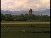 Vietnamese farmers work in fields near a large Hindu temple. Stock Footage