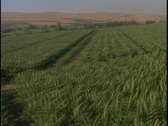 Stock Video Footage of Green crops fill a valley field.