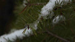 An extreme close-up of pine needles covered with a light snow Stock Footage