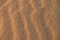 Desert sand blows across the desert floor. Stock Footage