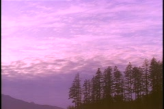 Clouds float across the sky over an evergreen forest. Stock Footage