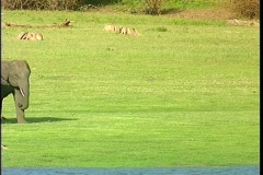 An Asian elephant family with a small baby walks across an open field. Stock Footage