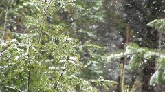 A close-up look at still green foliage in a heavy snow Stock Footage