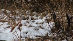 Snow falls on decaying ground cover Stock Footage