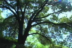 Sun shines through the leaves of trees in a forest. Stock Footage