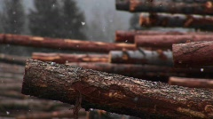 Light snow falls on a stack of cut logs Stock Footage