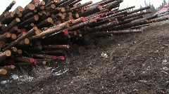 Stacks of cut logs of various lengths, some marked red on the ends Stock Footage