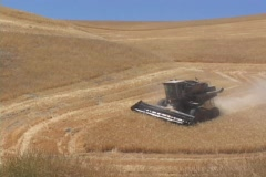 A combine cuts hay in a field. Stock Footage