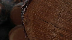 An extreme close-up of cut logs with saw-marks, rings and bark Stock Footage
