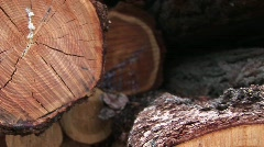 An extreme close-up of a cut log showing cracks, rings, sap and bark Stock Footage