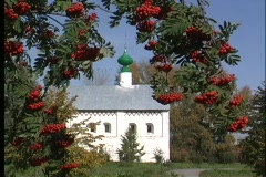 Red berries adorn the tree branches in front of the  Suzdal Church  in Russia. Stock Footage