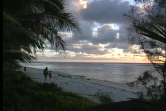 Trees and grasses providing a framework for Rarotongs's beach during golden-hour - stock footage