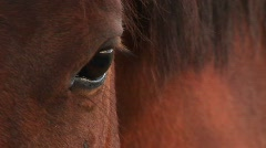 Extreme-close-up of a horse's right eye. - stock footage