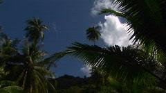 A low angle shot of tropical jungle foliage and blue sky. Stock Footage