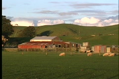 A medium shot of a scenic ranch and hills in New Zealand. Stock Footage