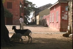 Goats and people hang out on these decaying streets in an African village. Stock Footage