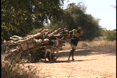 An African man walks alongside a donkey pulling firewood. Stock Footage