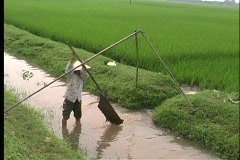 A birds-eye view of a woman hand irrigating a crop in Vietnam, Asia. Stock Footage