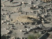 Stock Video Footage of A birds-eye of people and animals working in threshing circles in Asia.