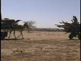Donkeys pull carts of wood along a barren countryside in West Africa. Stock Footage