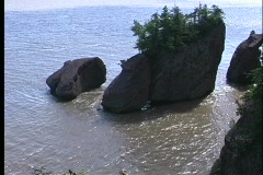 Small pine trees grow out of large rocks in the Bay of Fundy. Stock Footage