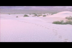 Tracks lead through deep snow in a wintry landscape. Stock Footage