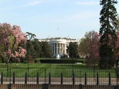 Stock Video Footage of The camera zooms in for a look at the White House in springtime