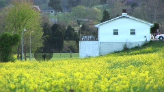 Bright yellow flowers surround a satellite dish Stock Footage