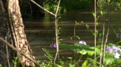 Purple wildflowers add color to a small shallow stream Stock Footage