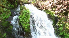 A rushing waterfall flows around lush vegetation Stock Footage