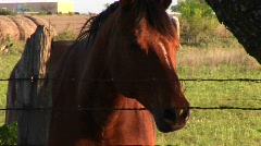 A horse in a corral  Stock Footage