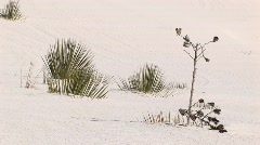 Medium shot of plants at White Sands National Monument in New Mexico Stock Footage