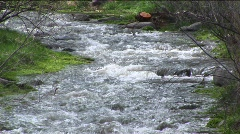 Medium shot of a flowing mountain stream Stock Footage