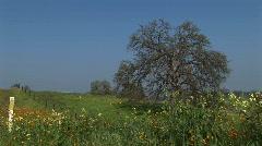 Medium shot of wildflowers blooming in a pasture in California Stock Footage