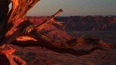Medium-shot of a dead tree stump at Canyonlands National Park Stock Footage