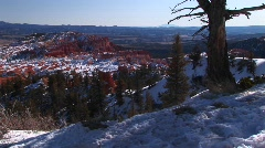 Medium-shot of pine trees and snow in Bryce Canyon National Park Stock Footage