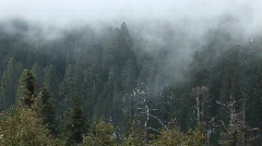 High-angle of a forest of pine trees Stock Footage