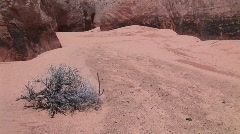 A barren bush growing in the sandy floor of a granite canyon Stock Footage