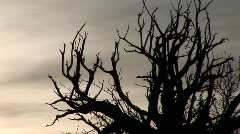 Bare branches are silhouetted against a gray sky Stock Footage