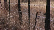 Close-up of a barbed wire fence in a grassy field Stock Footage