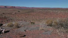 Pan-left to a cow skull laying in a barren desert Stock Footage