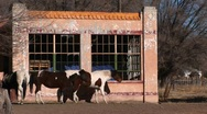 Medium shot of horses standing outside an abandoned building Stock Footage