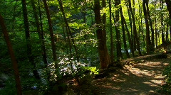 A New York hiking path on the Pocono Mountains at day. Stock Footage